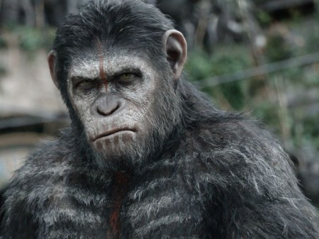 Caesar (Andy Sekis) isn't sure if he can trust humans in Dawn of the Planet of the Apes (2014)